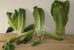 Keeping vegetables for longer